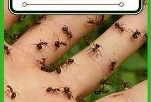 Ant reppelant