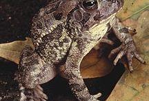 amphibians / by shannon hardy