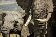 Elephants / Images by Alison M. Jones Photography
