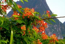 St. Lucia / Trip planning for Jan 2014