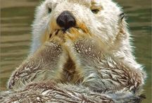 Otters...obsessed with em. / by Mary Burr