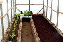 Greenhouse / Design