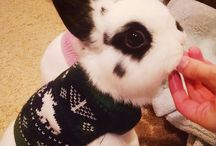 Baby animals in sweaters