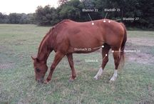Horse Acupuncture