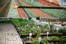 Huerto y jardín