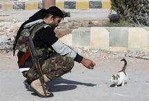 CATS IN WAR / Les chats durant les grands conflits armés