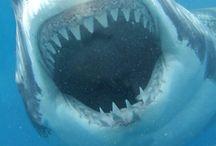 Hai haai