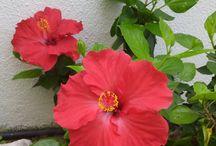 In my garden - No meu jardim / My plants, flowers, fruits, etc As minhas plantas, flores, frutas, etc
