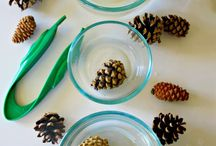 Why do pine cones open