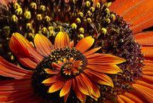 Berries, Flowers, plants 🌸🌷🌺🌹🌻🌾🍄🌼 / Amazing photos of beautiful flowers / by Londie Benson