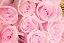 Ροζ Τριαντάφυλλα