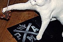 The PMA Cat