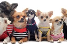 I Love Chihuahuas!! / by Rosemary Brown Sample