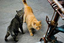 Koty na świecie (3) / o kotach w różnych zakątkach świata