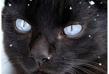 Spesial eye color cats