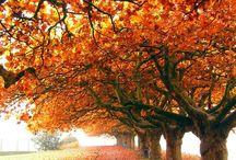 Autumn / by RichmondMom
