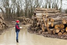Wilway Lumber's Blog / For the latest news and updates for the lumber, promos and  stocks.