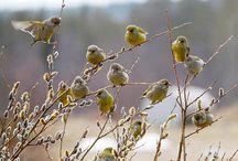 Birds / by Grace Toler