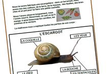 Thème escargot