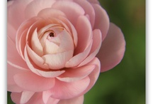 favorite flowers / by Bloem.Flowers.Chocolate.Paperie