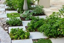 Plante combinate cu rocarie