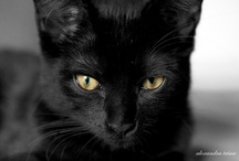 My Black Cat