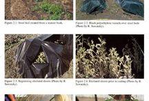 Muchovníky-pěstování