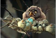 śmieszne ptaki