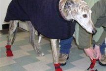 Dog jackets :-)