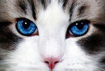 gato c