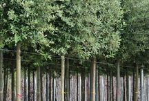 Trees for the garden
