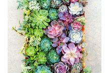 Succulents & Garden Ideas