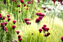 Naturgarten - Bepflanzungsideen | Liga Vogelschutz
