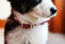 ♡♥I love puppies & kitties♥♡