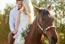 svatba kůň