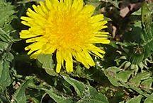 Úkol do INF-náhodné rostliny / Rostliny