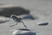 Shore Birds Waders & Wildlife