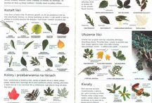 Rozpoznawanie roślin