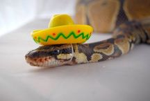 snakes with hats
