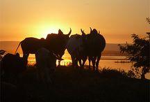 Coucher de soleil Madagascar / Quelques images de coucher de soleil dans les quatre coins de Madagascar