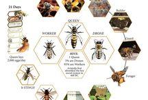 Včelí svět / materiály do mateřské školy