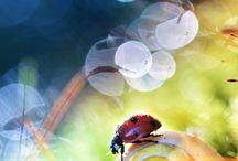 Ladybug / Божья коровка