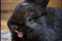 Rabbits / Rabbits