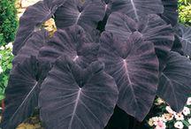 Plant & terrarium