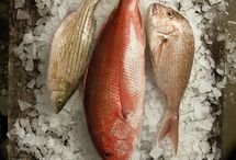 Fish - Food Photography