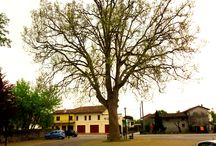Codognè Veneto Treviso Italy / Photos and news from one of the best Regions in Italy
