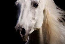 Konie - moje życie