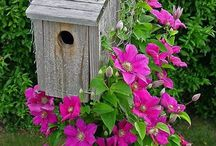 Bird houses and all things birds