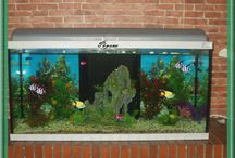 Akvaryum ve çeşitli balıklar. Aquarium and various fish