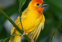 Kuş. Bird 10/09/15